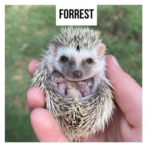 Forrest- $300