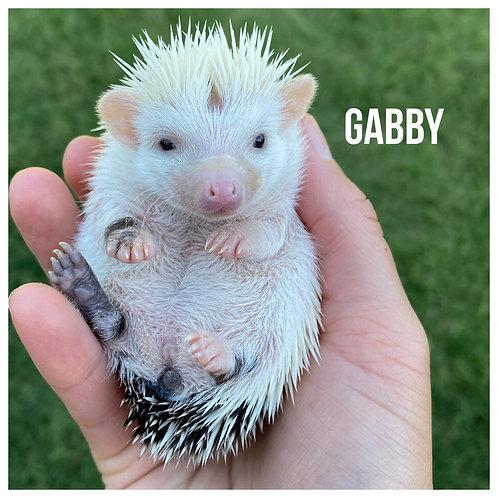Gabby- $275
