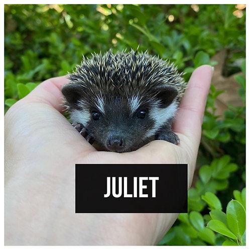 Juliet- $450