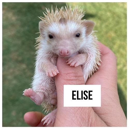 Elise- $300