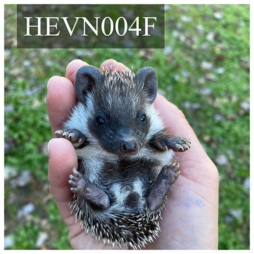 HEVN004F - $375