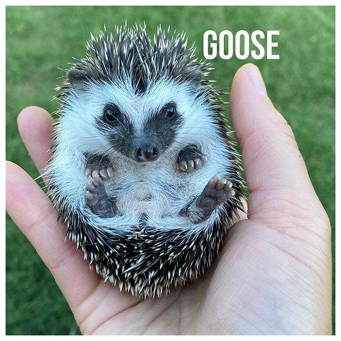 Goose- $325