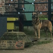 GNASHER THE GUARD DOG