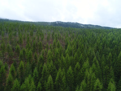 Nice Forest Drone Shot