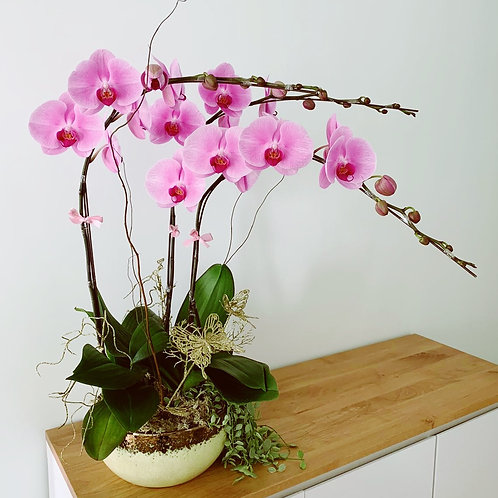 Pink Orchids 3 Stems