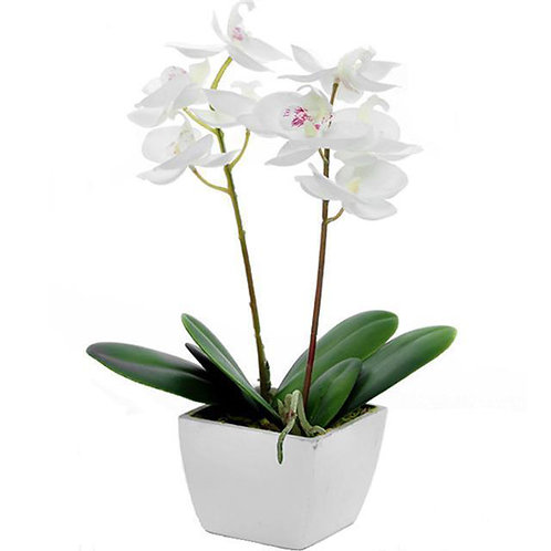 Coloured Silk Orchid Pot Plant in White Container