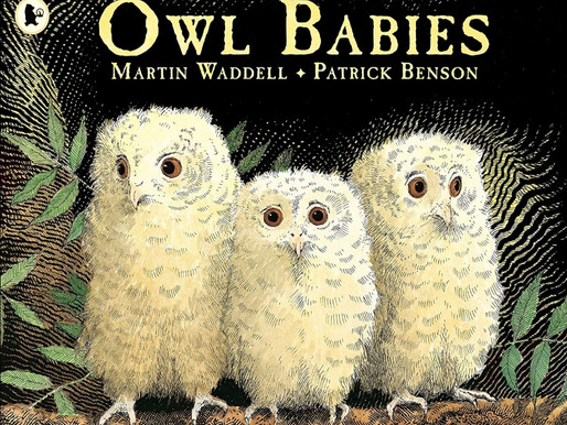 Owl Babies story