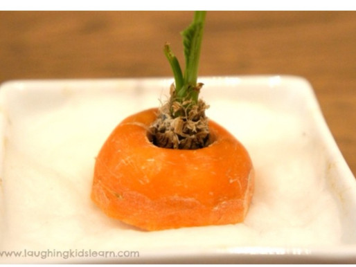 Easter holiday activity - Growing a carrot top