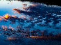 Monet fell in the ranch lake.jpg