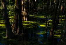 Monroe-Bayou Evening