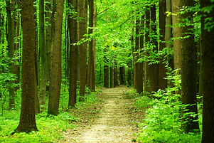 a path is in the green forest.jpg