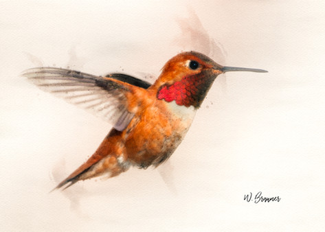 Rufous Male Hummingbird Watercolor.jpg