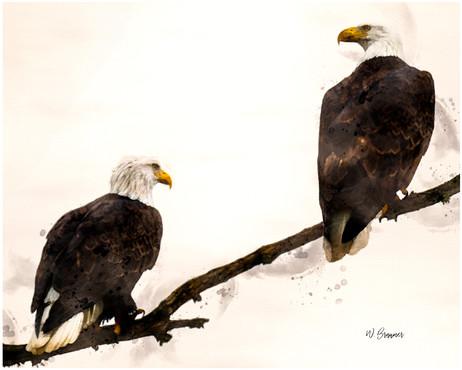 Bald Eagle Pair Watercolor.jpg