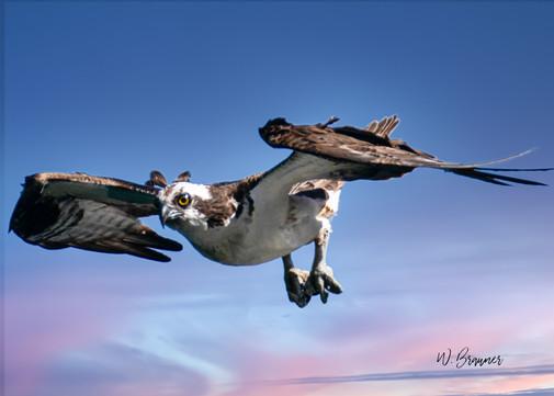 Osprey II.jpg