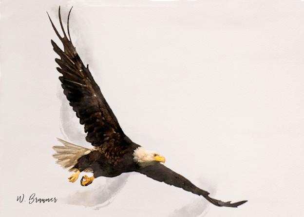 Bald Eagle Painting.jpg