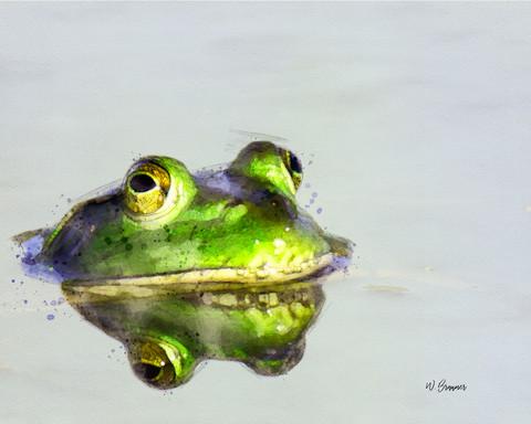 Bullfrog watercolor.jpg