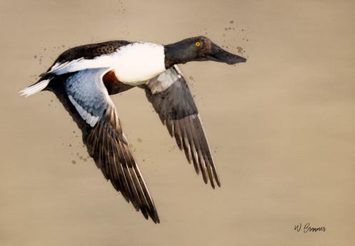 Spoonbill Painting.jpg