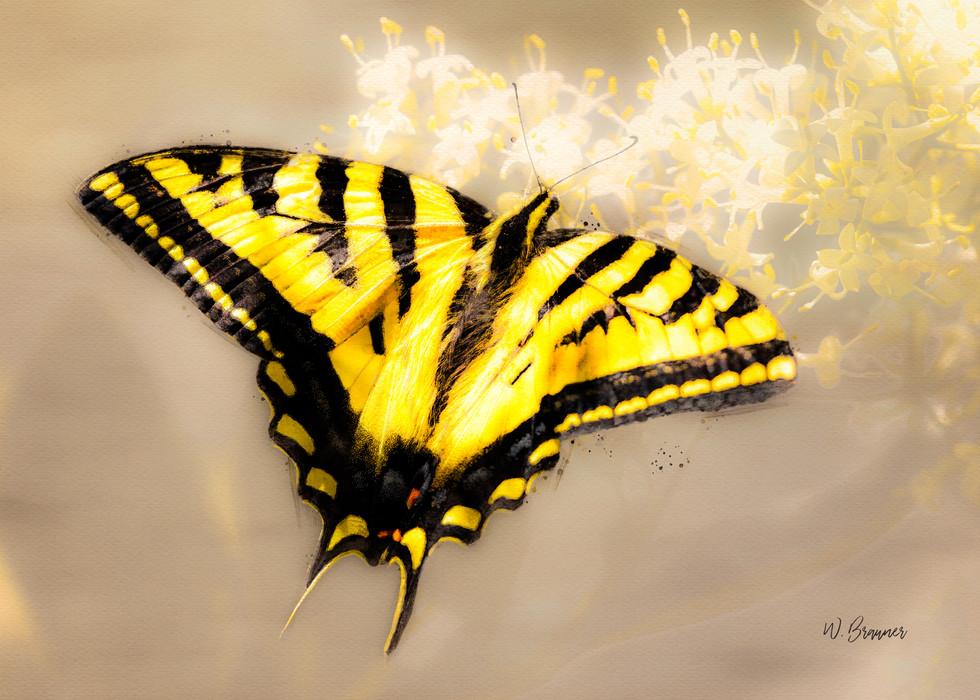 Swallowtail Butterfly Watercolor.jpg