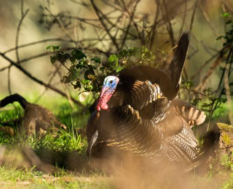 Tom in the brush.jpg