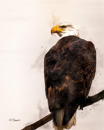 Bald Eagle Watching Watercolor.jpg