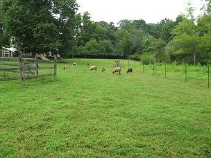 Headquarter Farms