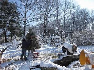 Murray Christmas Trees