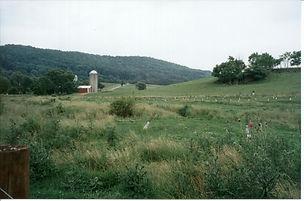 BSB Holsteins