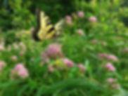 Wild Ridge Plants