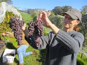 Mount Salem Vineyards