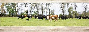 River Valley Farm / Cotton Cattle Company