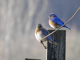 NJ Audubon Society Wattles Stewardship Center