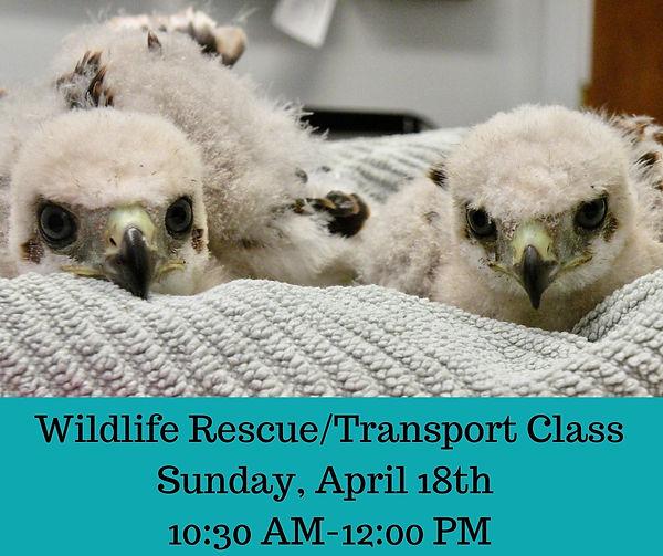 Wildlife Rescue_Transport Class.jpg
