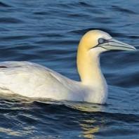 Shorebirds & Seabirds