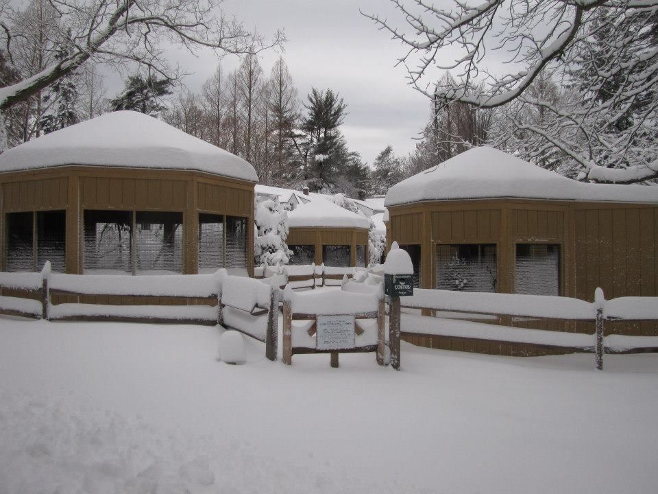 Snowy Aviaries.jpg