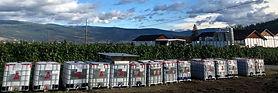 bins - winecrush.jpg
