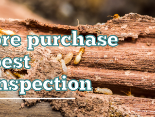 Why Getting Professional Pre Purchase Pest Inspection Is So Important?