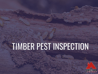 Buying a new home? Don't forget to do a timber pest inspection