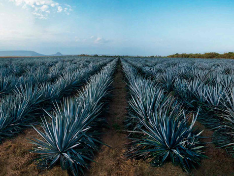 Tequila: Real Institution