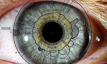 Mappa iridologica.jpg