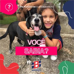 #VocêSabia?: Brincar com animais de estimação alivia o estresse e pode ajudar alunos a terem um melh