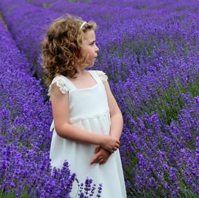 lavender 7.JPG