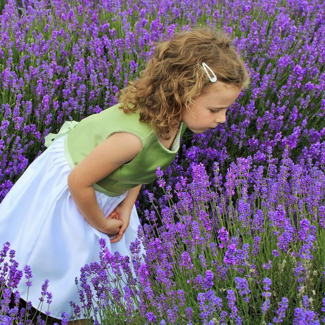 lavender shot.jpg