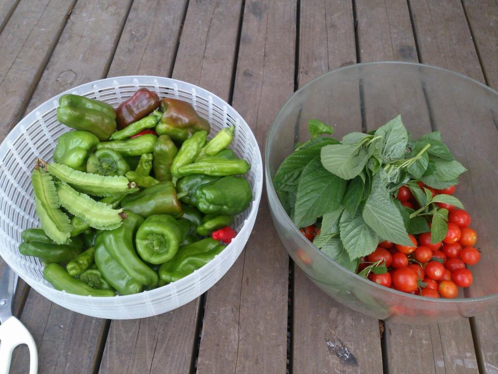 体験④ 体にやさしい野菜です