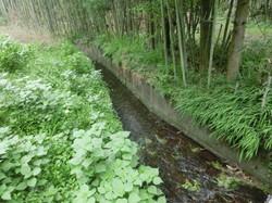蛍の川(徒歩1分)