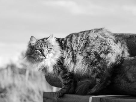 Kitten waiting list 2021