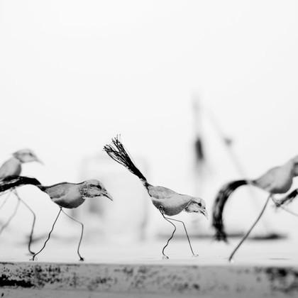 Carrera de Aves