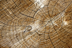 cut-end-of-log-with-tree-rings-texture
