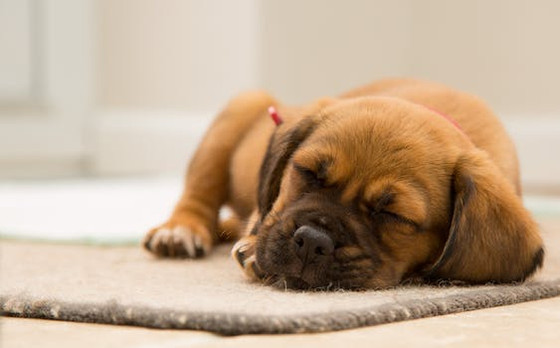 Harmful foods to avoid for your Dog