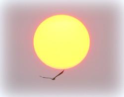 Eagle flying across the sunset