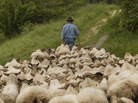 FED BY THE SHEPHERD